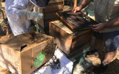 Slade Adventure's swarm of the bees