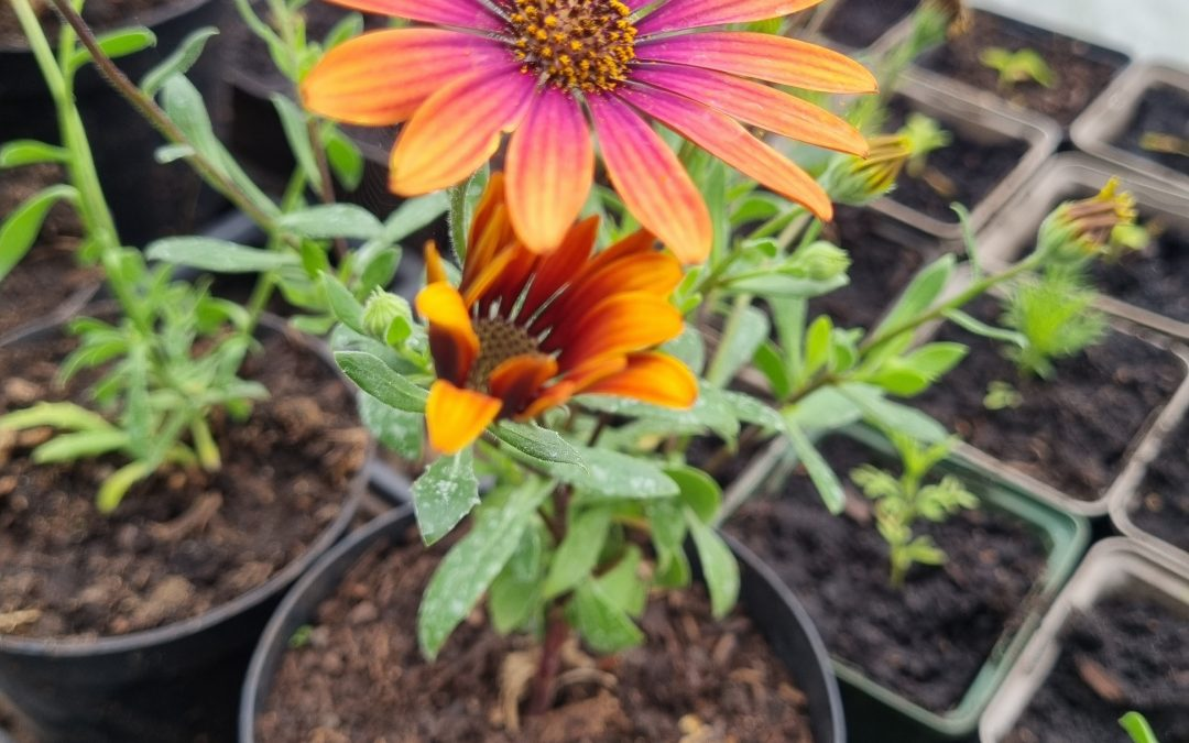 Plant Sale Sunday 23rd May 1.30-4.30pm